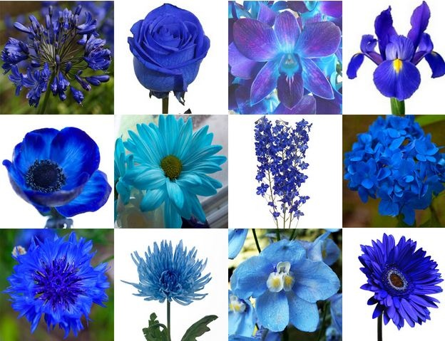 Des Moines Blue Flowers Des Moines Blue Flowers For Sale